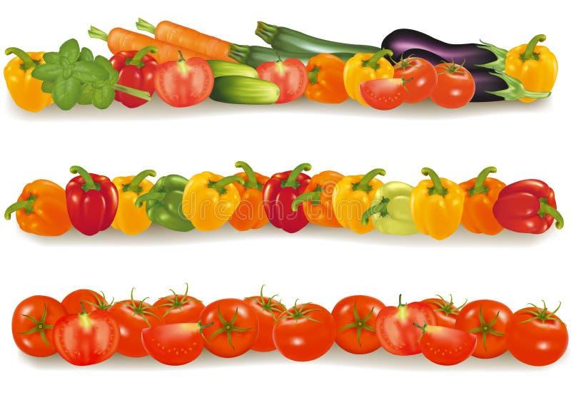 Três beiras vegetais do projeto. ilustração stock