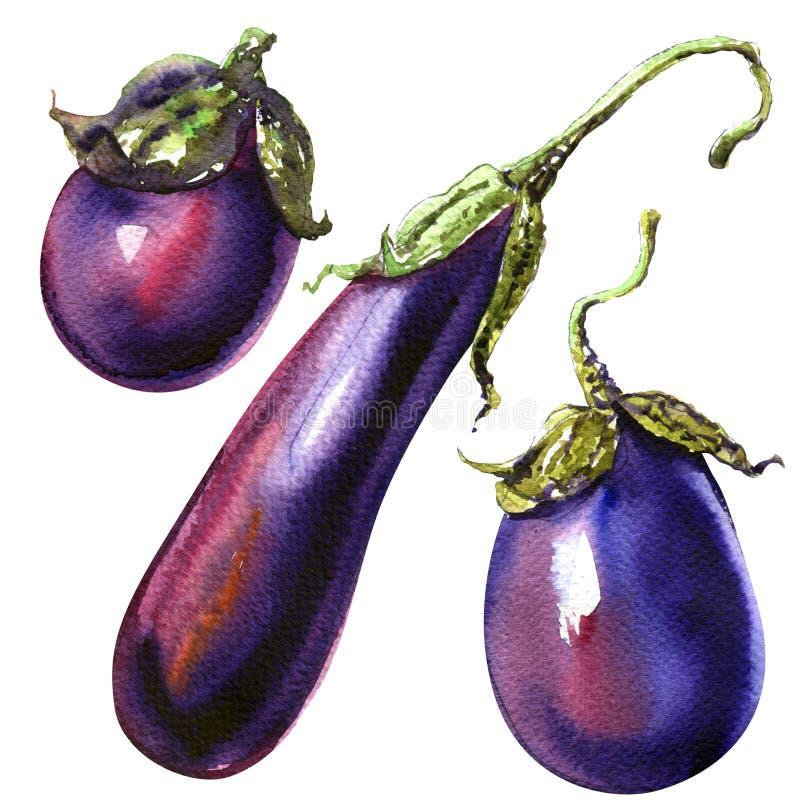 Três beringelas ou vegetais crus isolados, ilustração da beringela da aquarela ilustração stock
