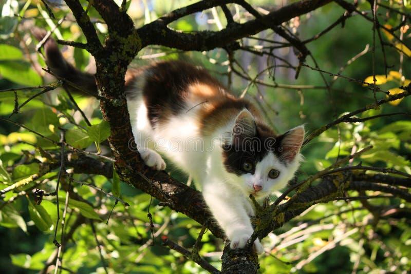 Três bonitos coloriram o gatinho que rói no ramo de árvore imagem de stock