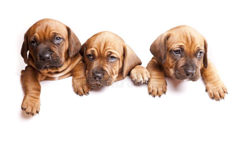 Três cães emitem uma mensagem! imagens de stock royalty free