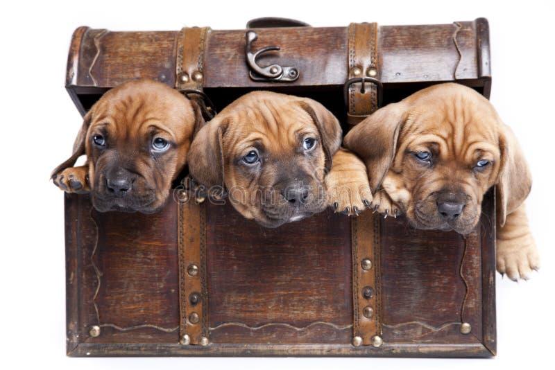Três cães felizes no fundo branco imagens de stock royalty free