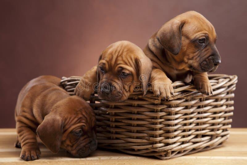 Três cães felizes que sentam-se no assoalho de madeira fotos de stock royalty free