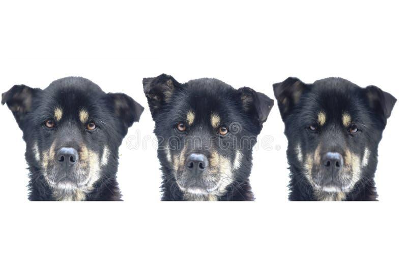 Três cabeças de cão fotografia de stock