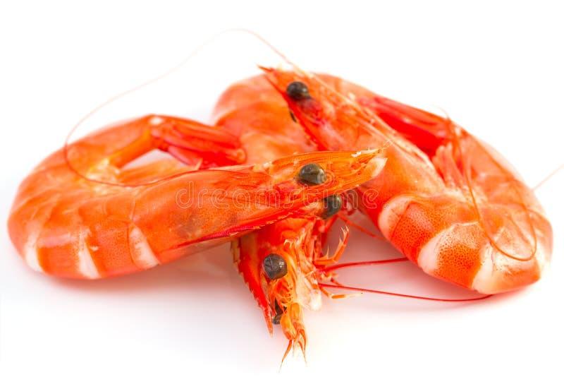 Três camarões no branco fotos de stock royalty free