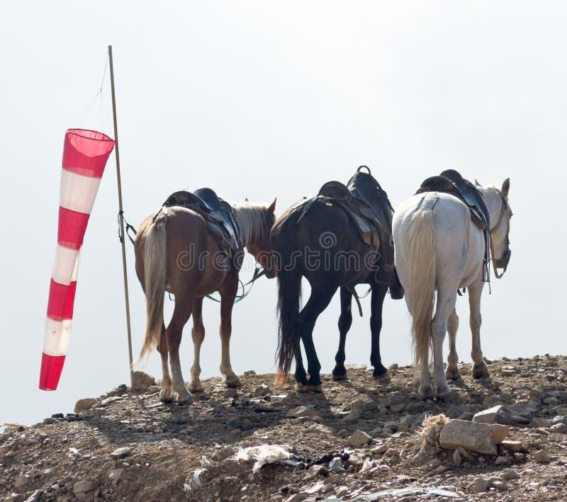Três cavalos foto de stock