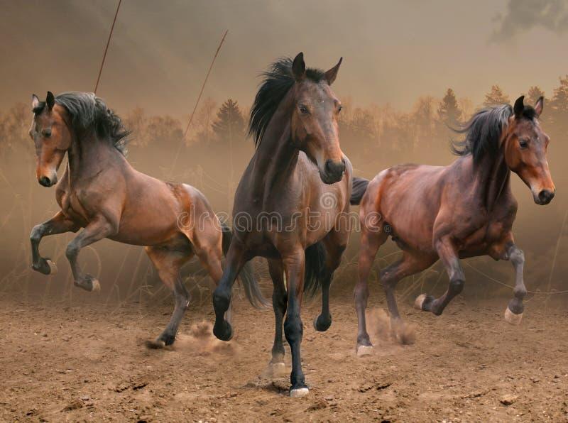 Três cavalos imagem de stock royalty free