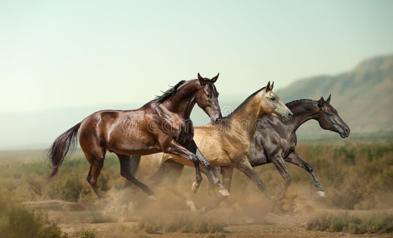 Três cavalos bonitos nas pradarias imagem de stock
