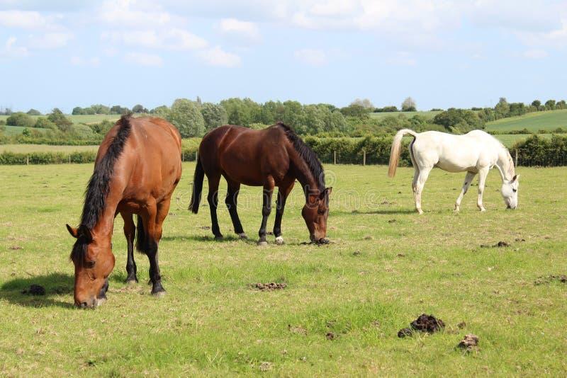 Três cavalos diferentes bonitos da cor imagens de stock