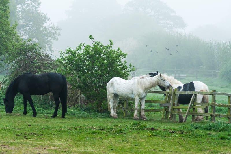 Três cavalos em um campo imagem de stock