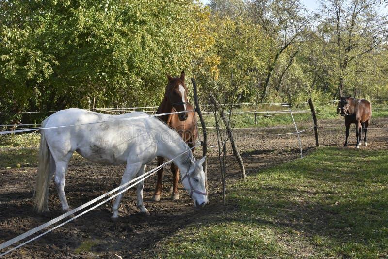 Três cavalos em um pasto cercado imagens de stock