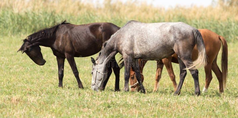 Três cavalos em um pasto na natureza fotos de stock