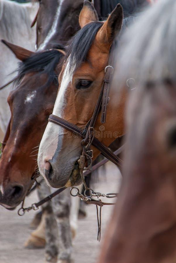 Tr?s cavalos no prado imagens de stock