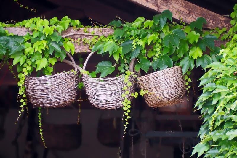 Três cestas de vime redondas decorativas usadas velhas, penduradas em um feixe de madeira com hera ao redor imagens de stock