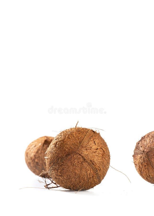 Três cocos peludos no fundo branco, espaço da cópia imagens de stock