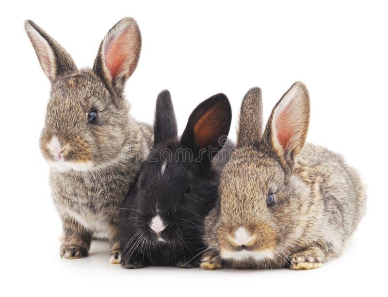 Três coelhos fotos de stock royalty free