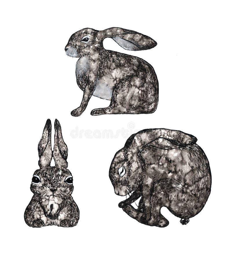 Três coelhos cinzentos da aquarela isolados no fundo branco ilustração do vetor