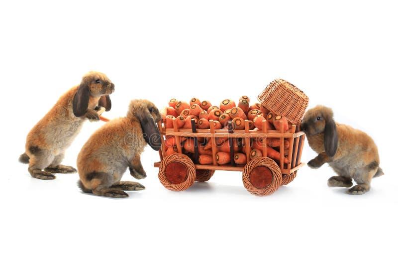 Três coelhos de Brown imagens de stock royalty free