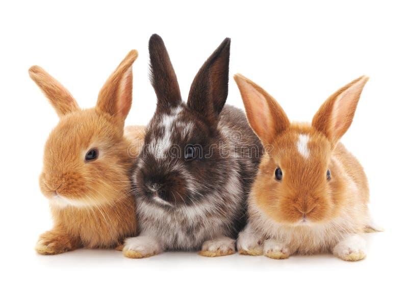 Três coelhos pequenos fotografia de stock royalty free