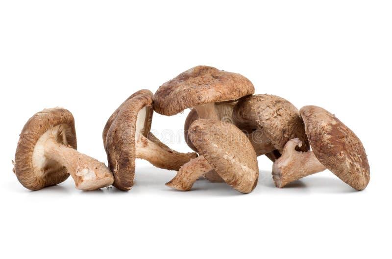 Três cogumelos de shiitake frescos fotos de stock royalty free