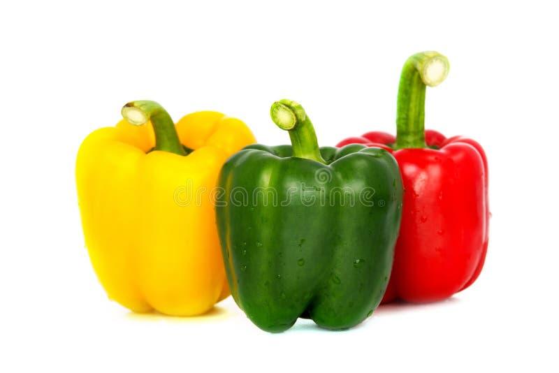 Três coloriram o isolado maduro das especiarias da paprika da pimenta do vegetariano fresco vermelho da pimenta de sino do verde  foto de stock