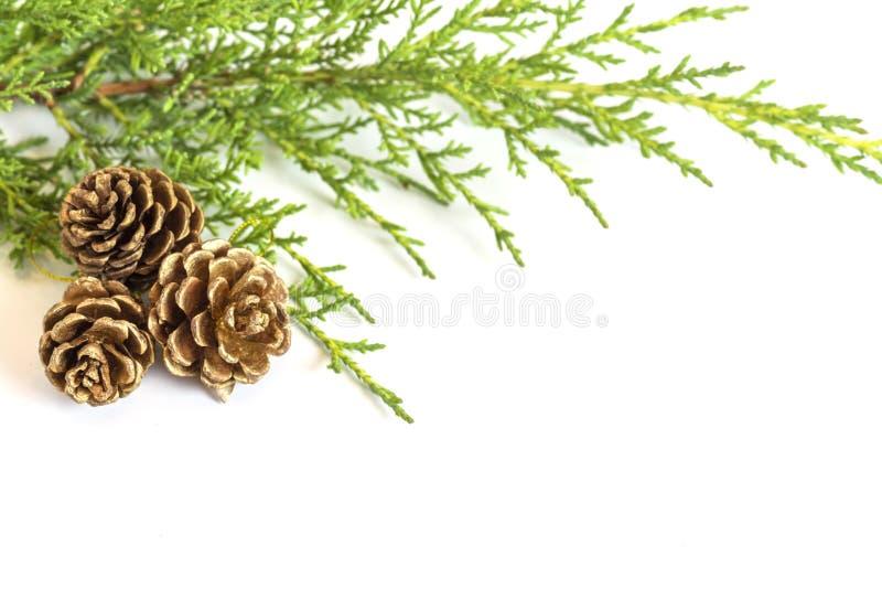 Três cones do pinho do ouro do feriado e ramos do abeto isolados no branco fotos de stock royalty free