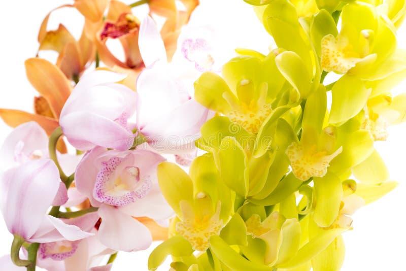 Três cores de flores da orquídea fotografia de stock
