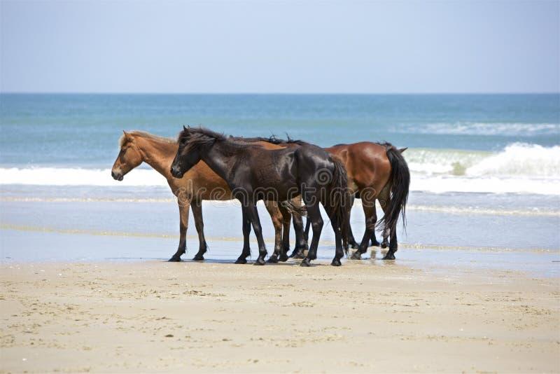Três em uma praia foto de stock