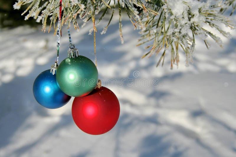 Três esferas da cor em uma filial dos pinhos fotografia de stock