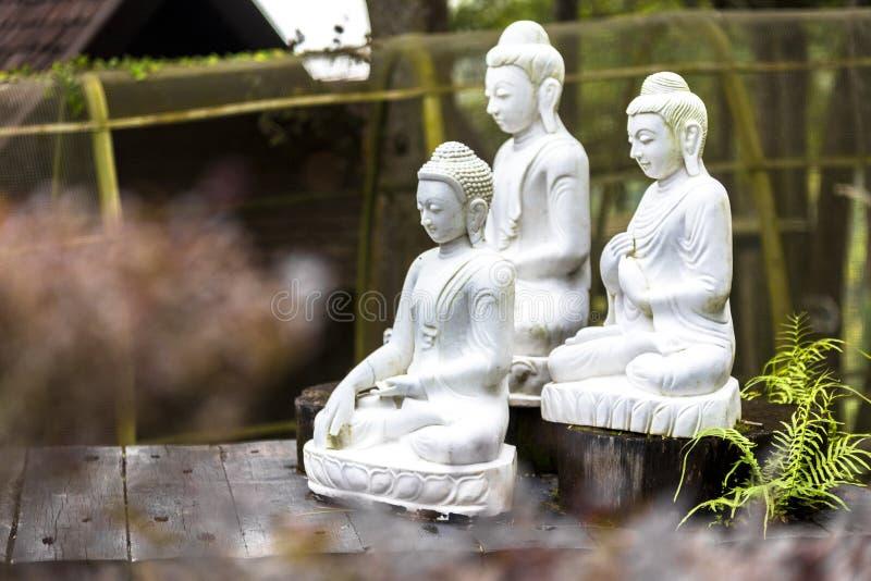 Três estátuas budistas brancas na exposição do jardim entre plantas e característica da água fotos de stock