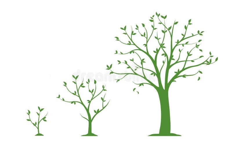 Três fases da árvore crescente - ilustração lisa do vetor ilustração stock