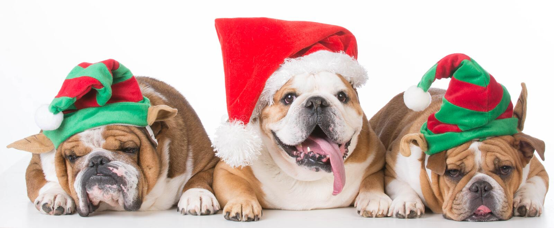 Três filhotes de cachorro do Natal fotos de stock royalty free