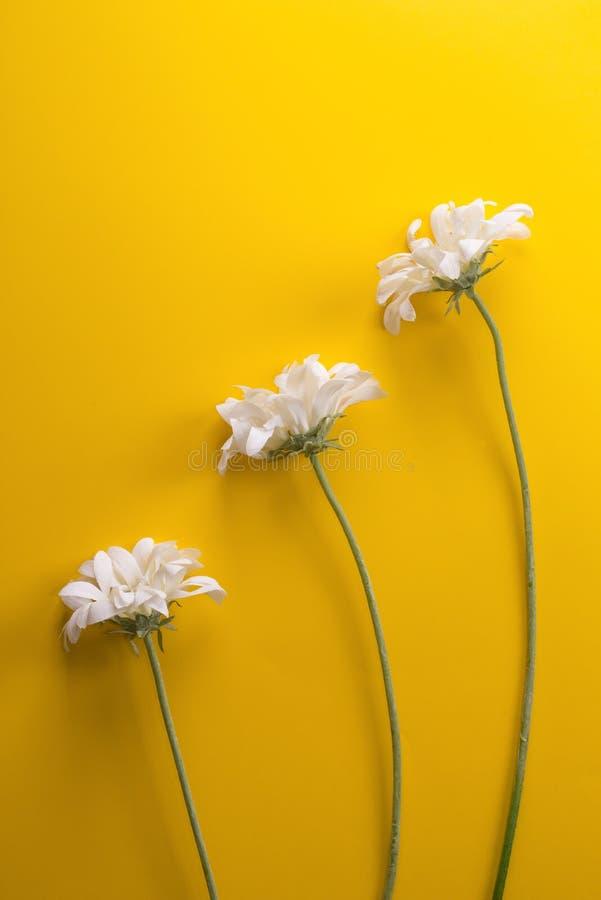 Três flores brancas imagem de stock