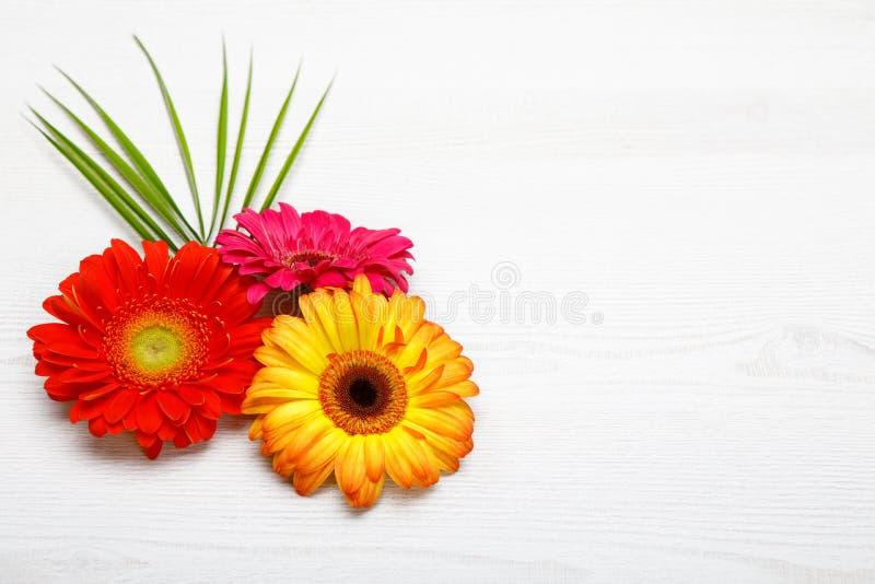Três flores do Gerbera na tabela de madeira branca Decoração da mola com flor da margarida fotografia de stock royalty free