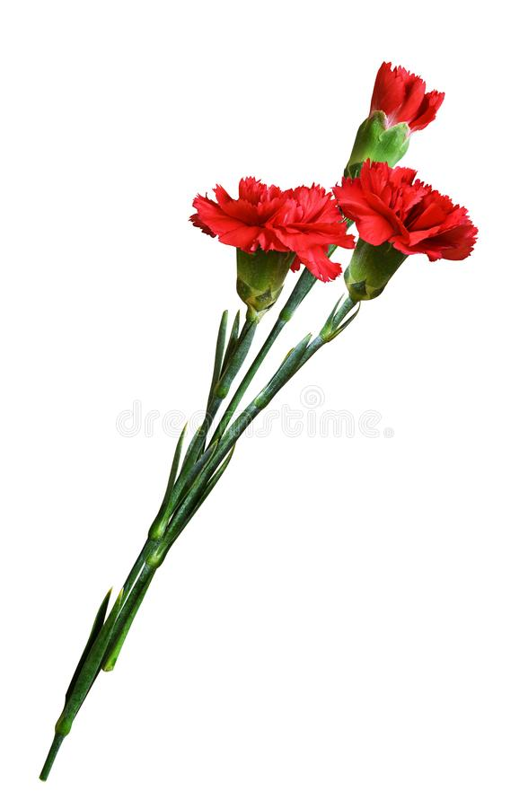 Três flores vermelhas do cravo em um ramalhete foto de stock royalty free
