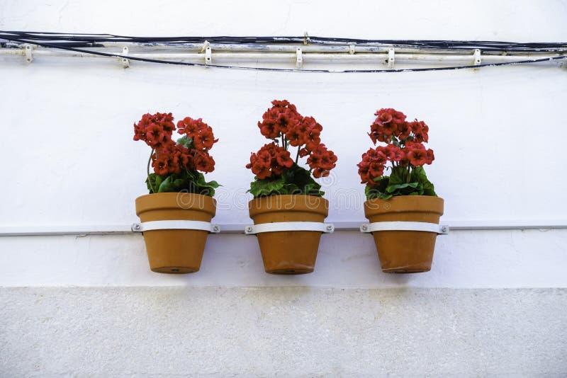 Três flores vermelhas vibrantes do gerânio em uns vasos de flores penduram na linha de uma parede branca da casa foto de stock royalty free