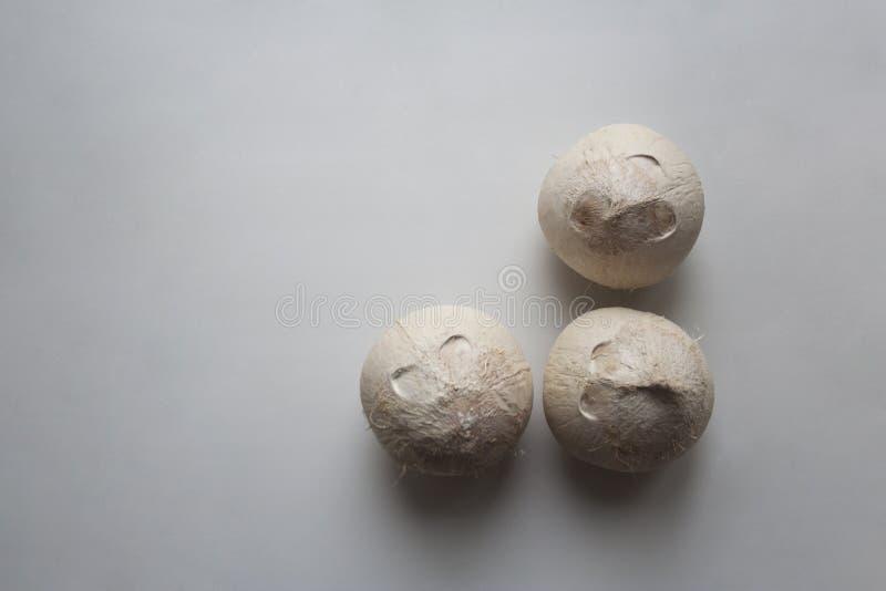 Três frutos do coco no fundo branco de cima de foto de stock
