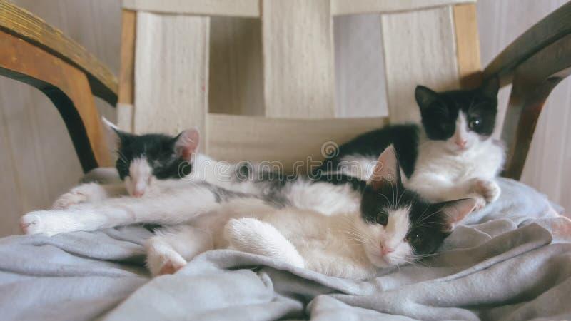Três gatinhos brincalhão pequenos bonitos fotos de stock