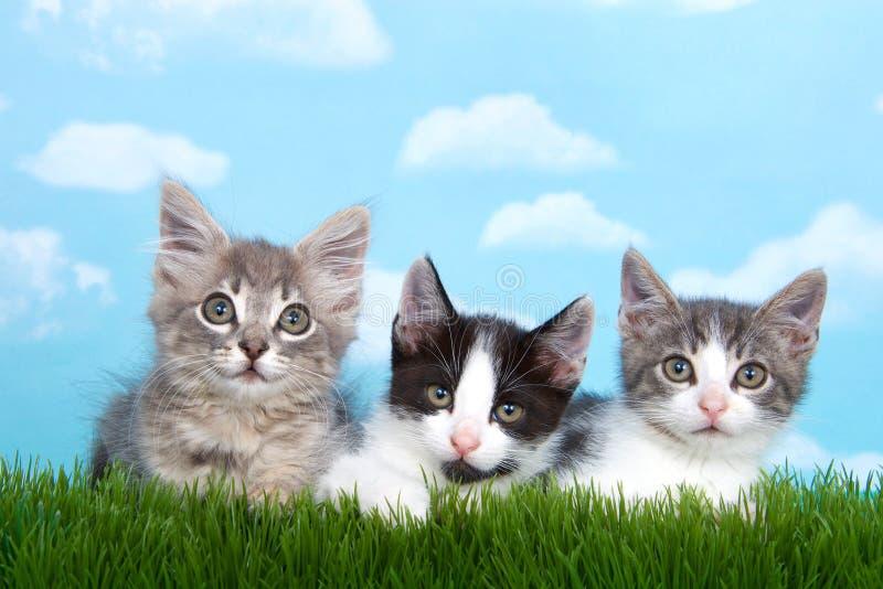 Três gatinhos do gato malhado na grama que olha para a frente fotos de stock