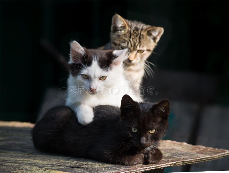 Três gatinhos multi-coloridos em um fundo escuro imagens de stock