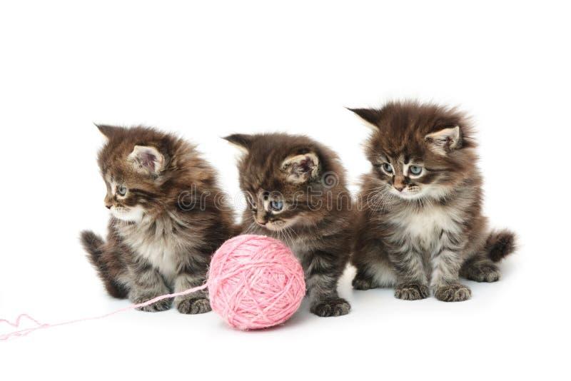 Três gatinhos pequenos imagem de stock