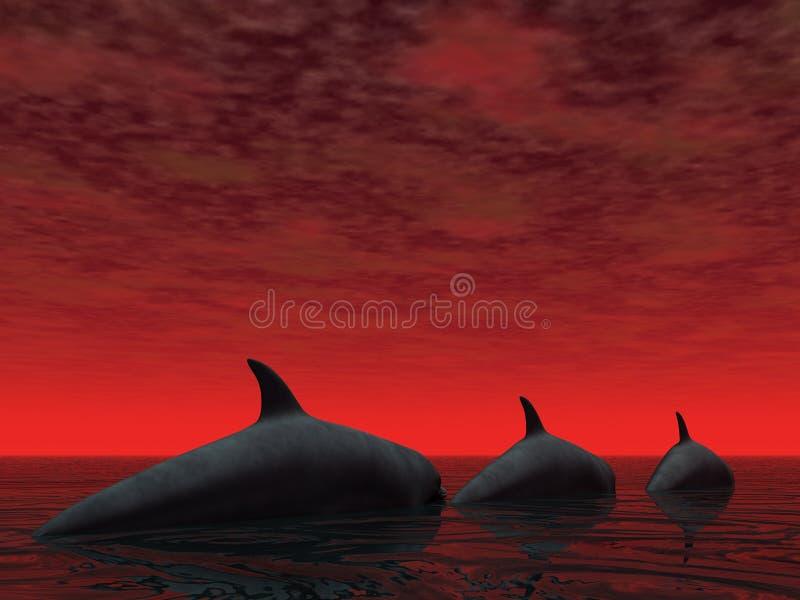 Três golfinhos ilustração royalty free