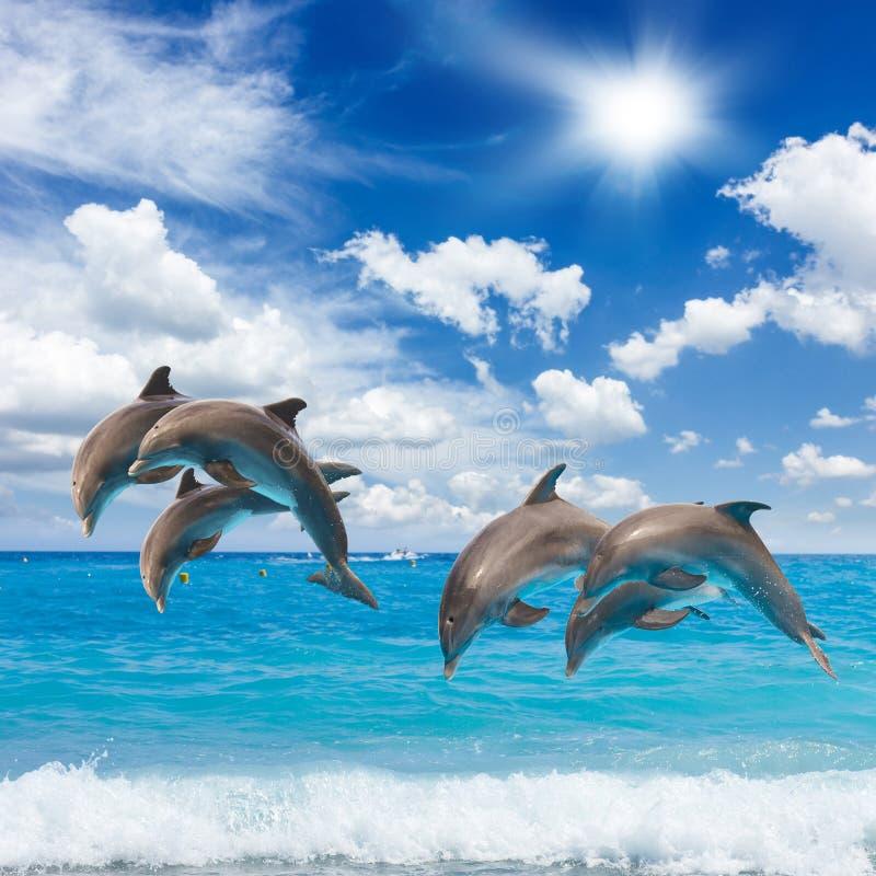 Três golfinhos de salto fotografia de stock