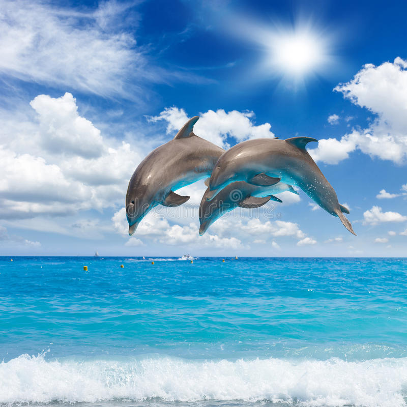 Três golfinhos de salto imagem de stock