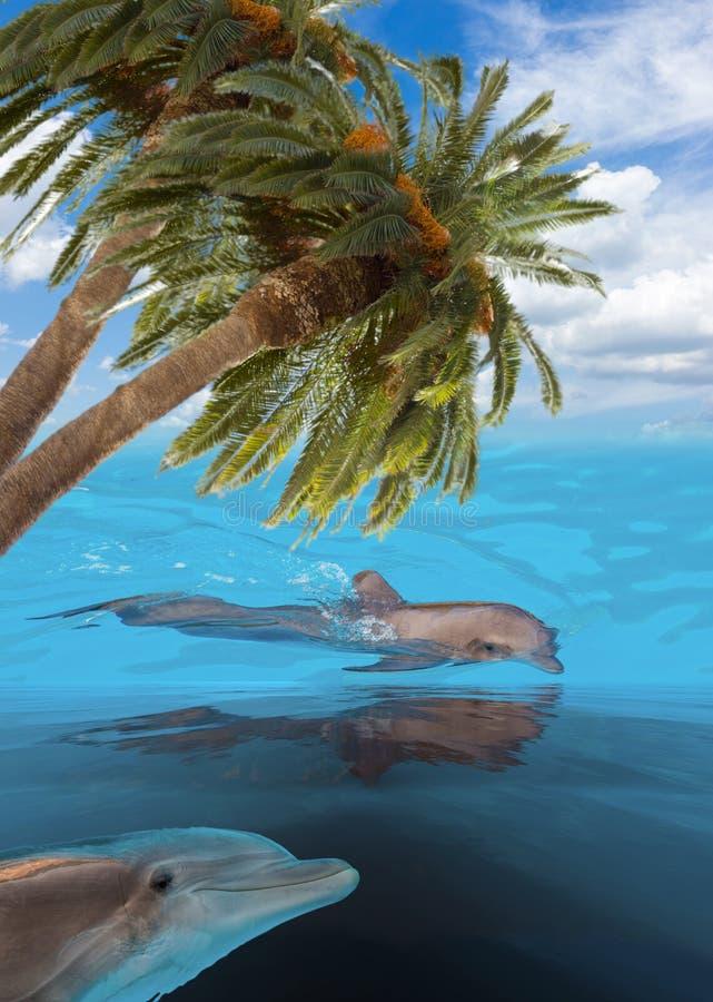 Três golfinhos de salto foto de stock royalty free