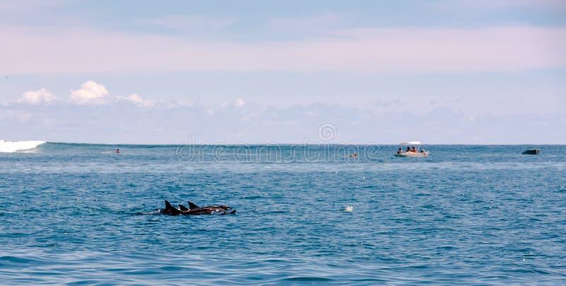 Três golfinhos que nadam imagens de stock royalty free