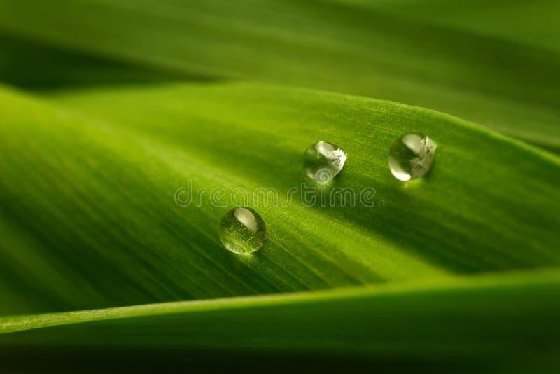Três gotas da água em uma folha verde imagens de stock royalty free
