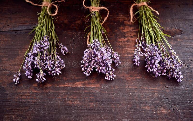 Três grupos da alfazema perfumada fresca foto de stock