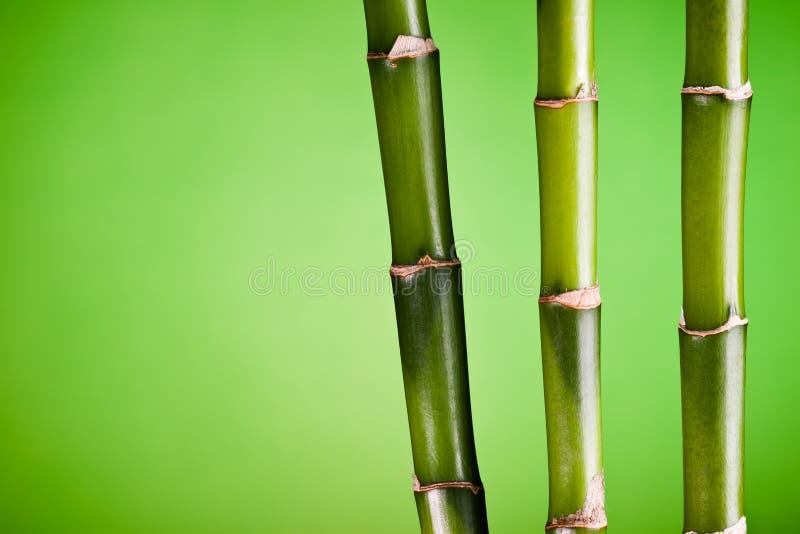 Três hastes de bambu no verde fotos de stock