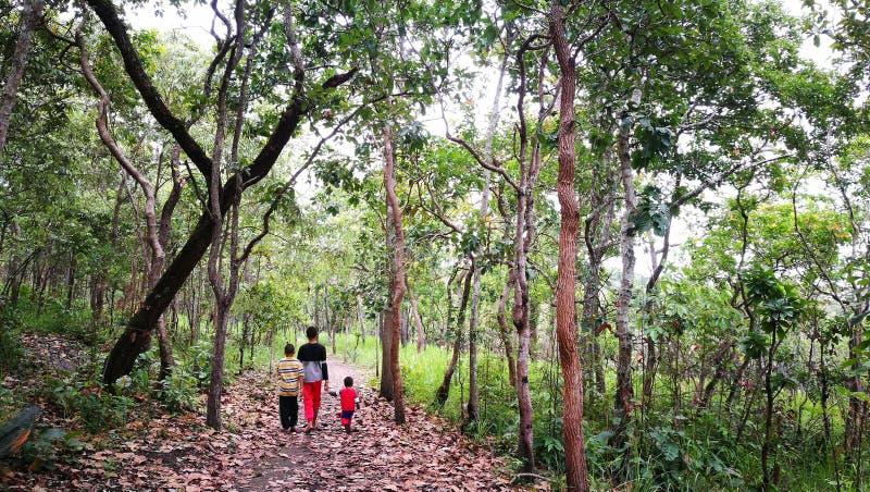 Três irmãos que andam junto com o cuidado da família na floresta verde imagens de stock royalty free