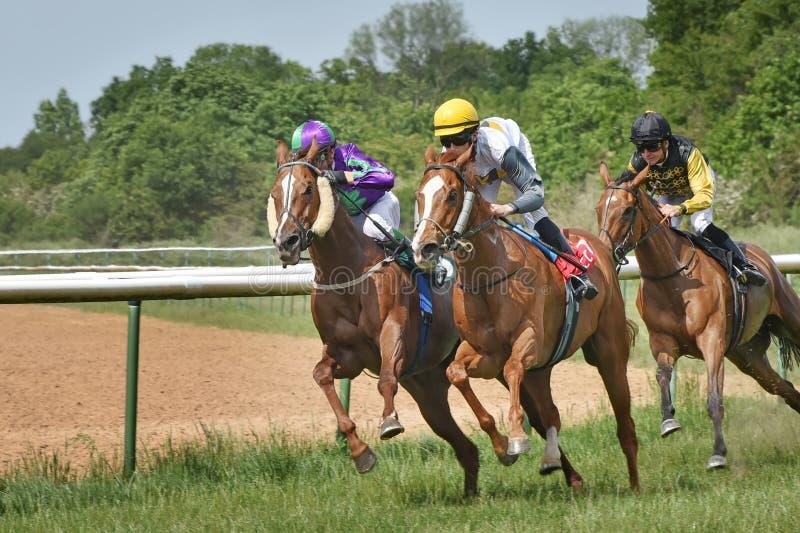 Três jóqueis a cavalo Corrida de cavalos 22 de agosto de 2015 Magdeburgo, Alemanha fotos de stock